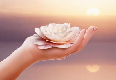 Main lotus rose